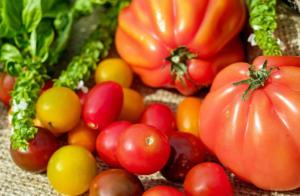 pomodori gialli origine e proprietà